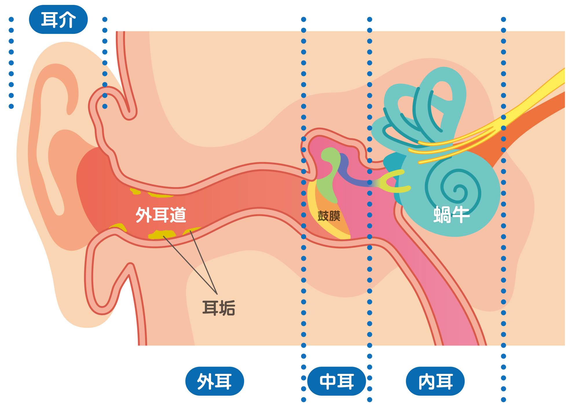 耳から出る分泌物+ホコリ=耳垢