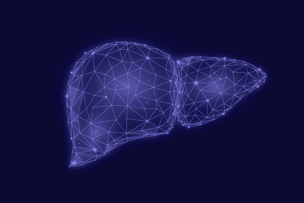 肝臓の3つの働き