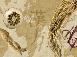 現代医学における漢方の歴史は紀元前から──