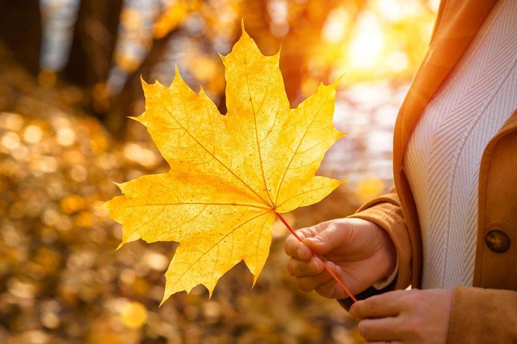 秋の気候が肌に与える影響